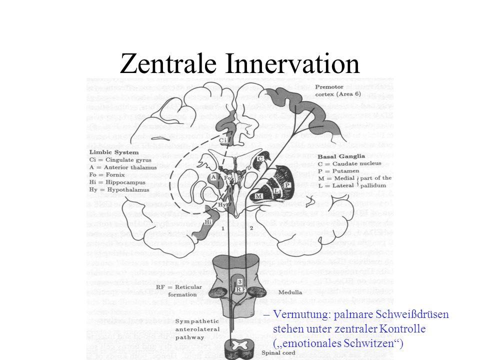 """Zentrale Innervation Vermutung: palmare Schweißdrüsen stehen unter zentraler Kontrolle (""""emotionales Schwitzen )"""