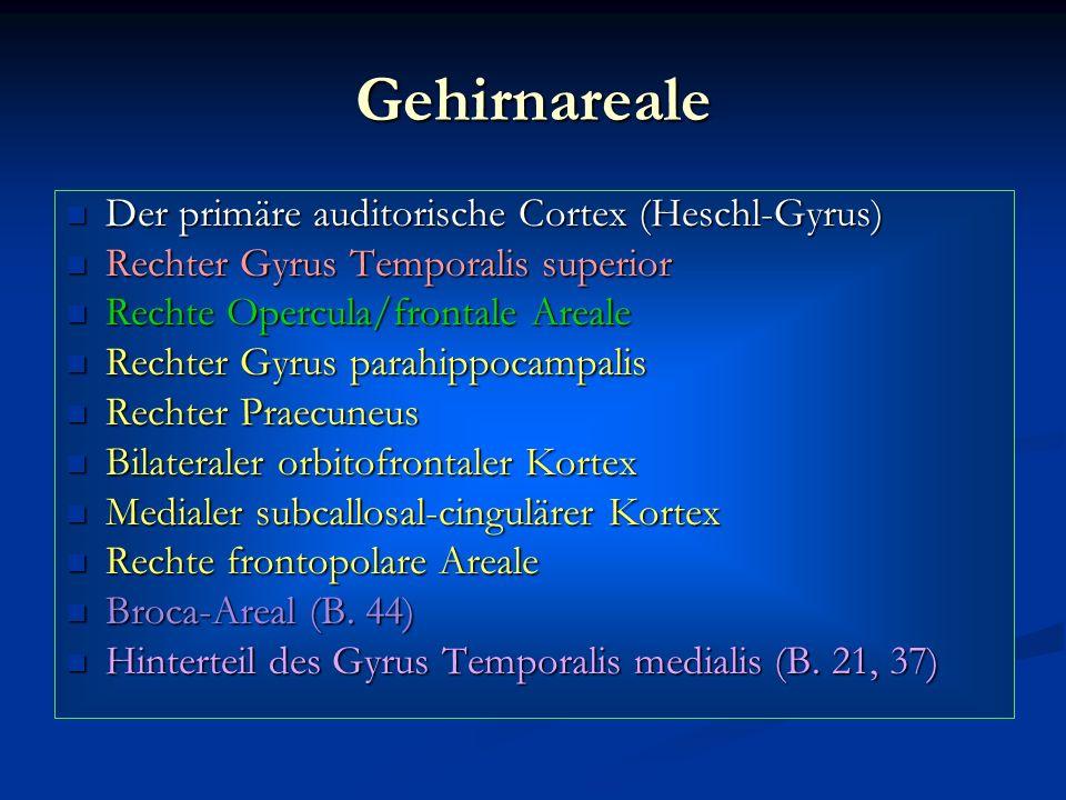 Gehirnareale Der primäre auditorische Cortex (Heschl-Gyrus)