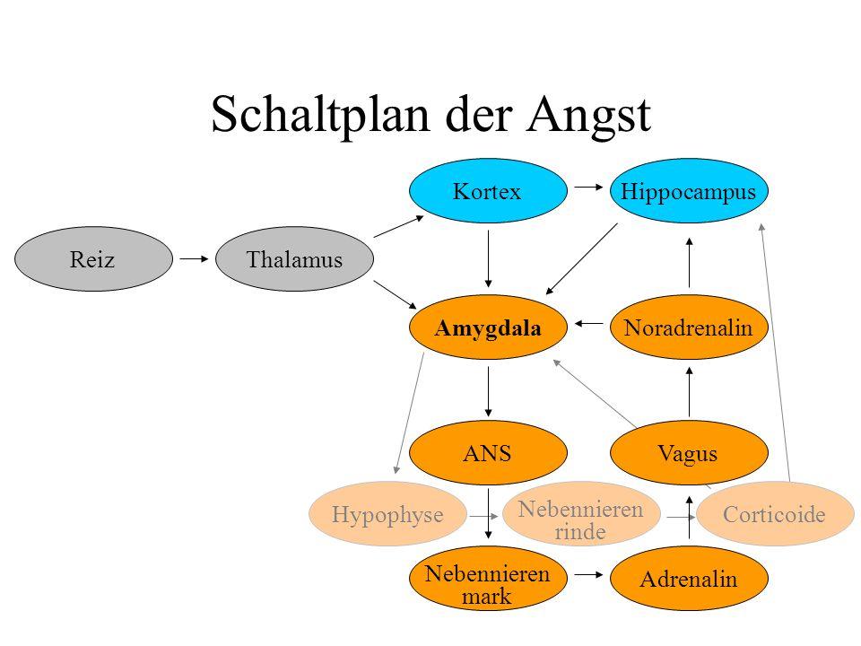 Schaltplan der Angst Hippocampus Kortex Reiz Thalamus ANS mark