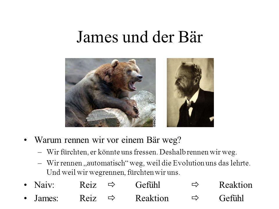 James und der Bär Warum rennen wir vor einem Bär weg