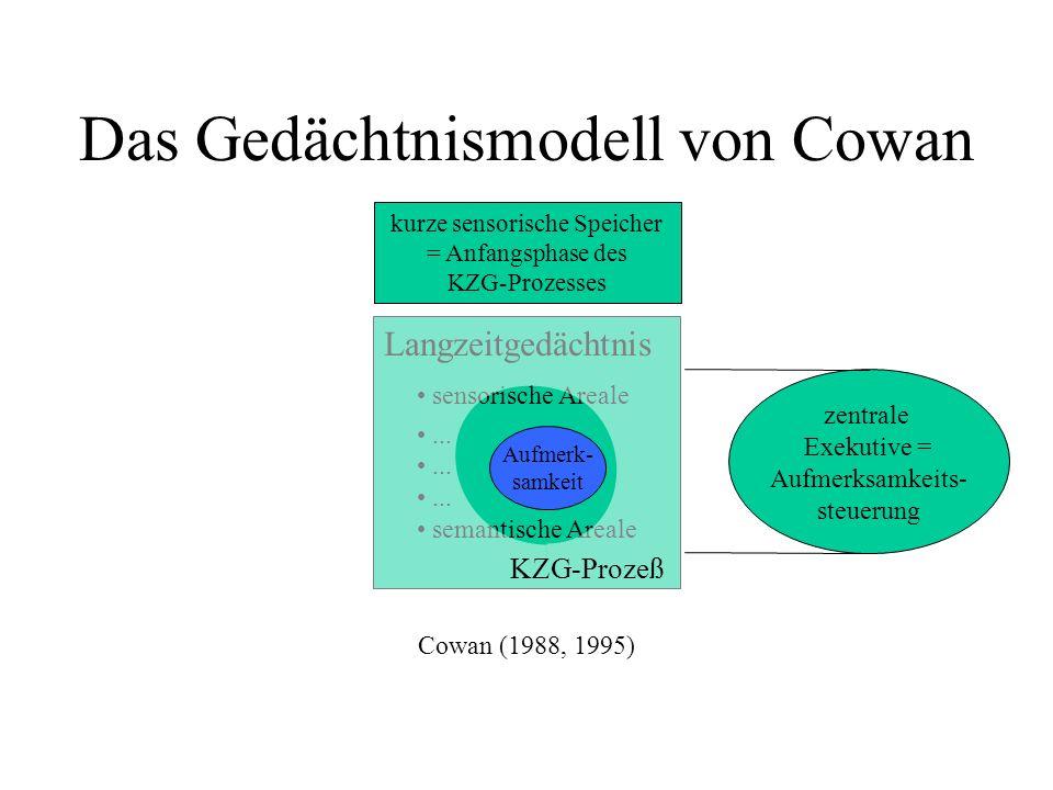 Das Gedächtnismodell von Cowan