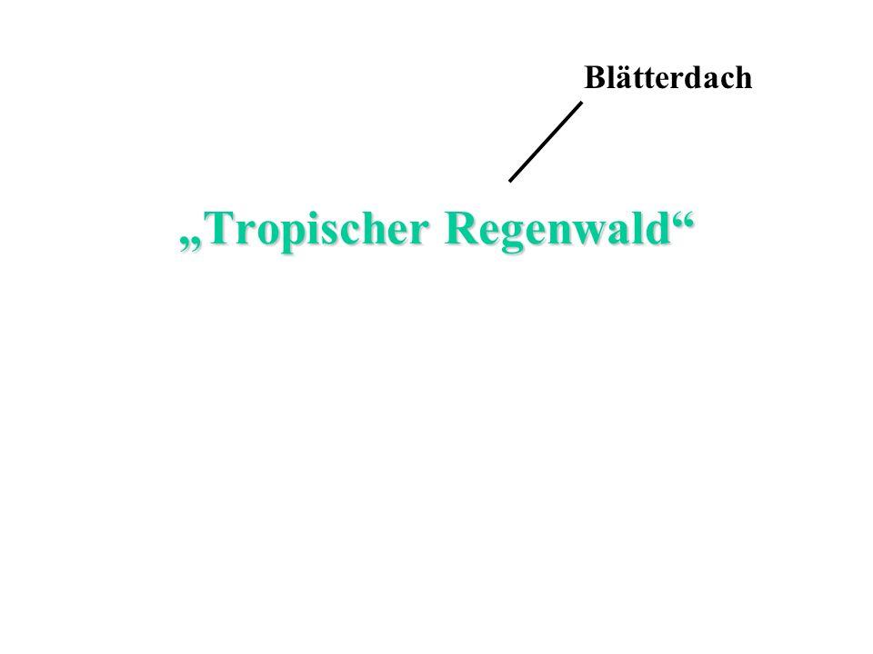 """""""Tropischer Regenwald"""