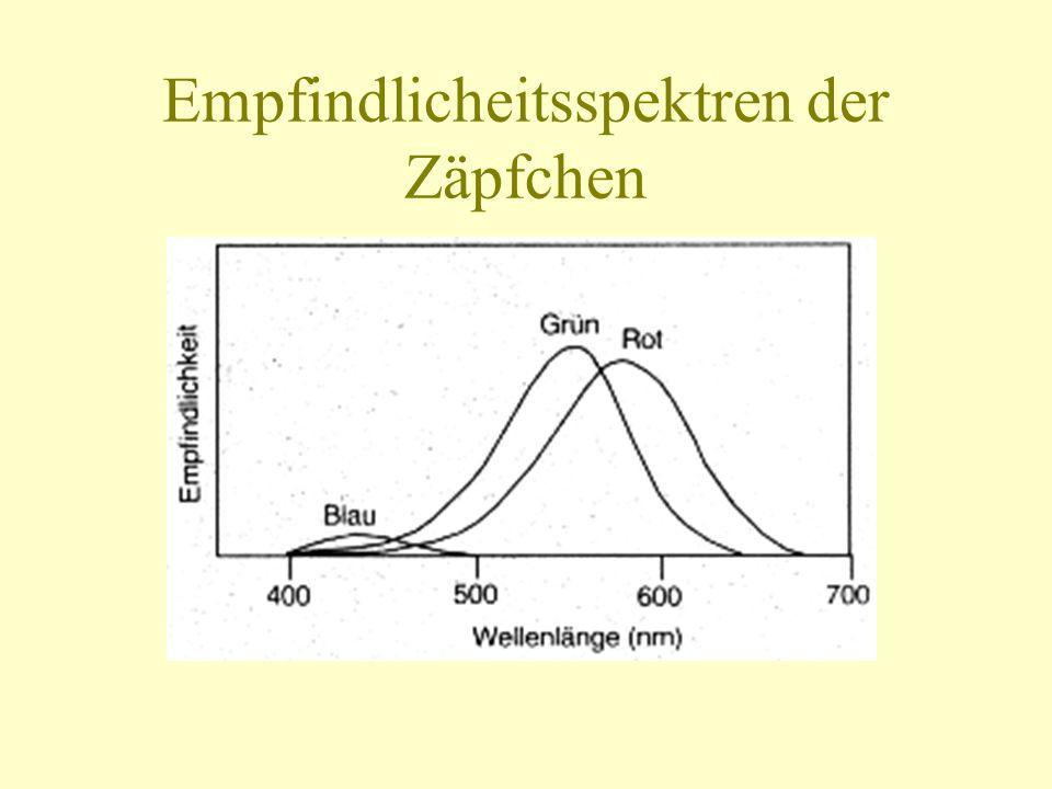 Empfindlicheitsspektren der Zäpfchen