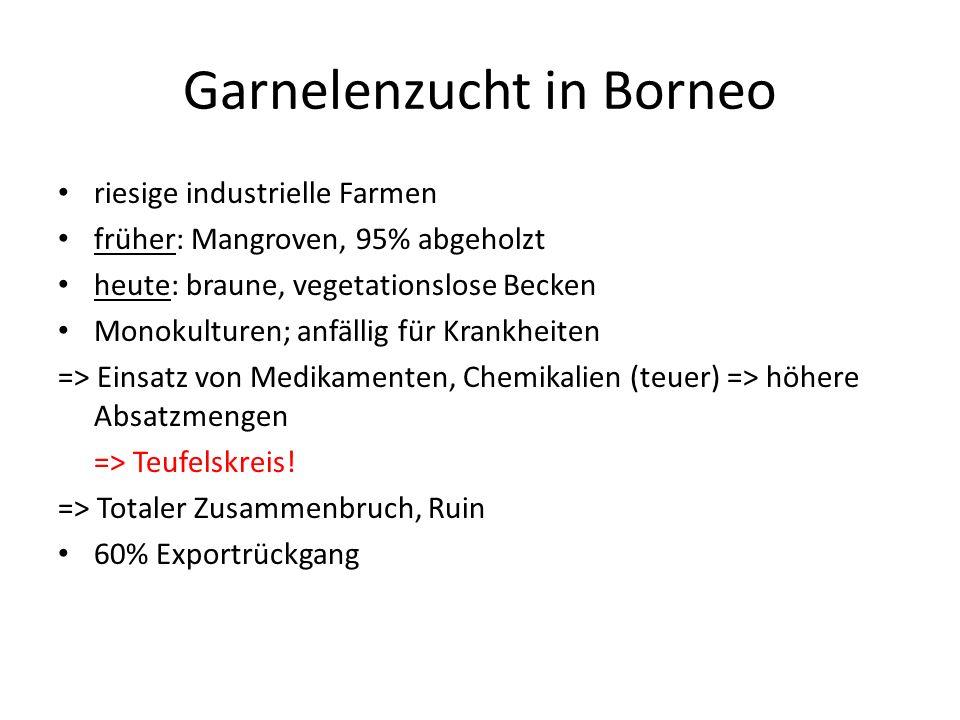 Garnelenzucht in Borneo