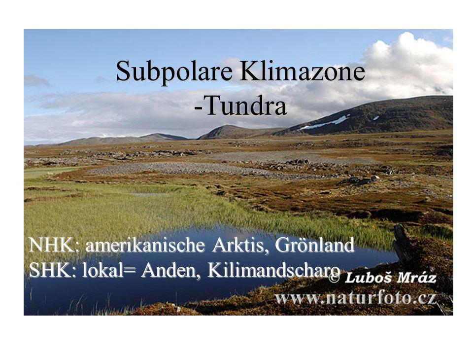 Subpolare Klimazone -Tundra