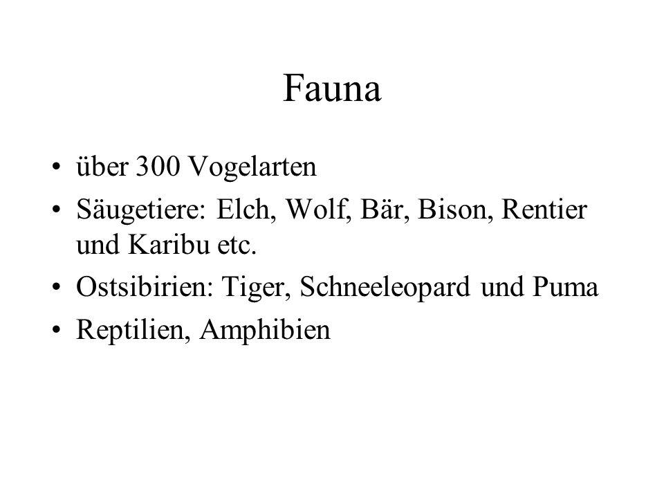 Fauna über 300 Vogelarten. Säugetiere: Elch, Wolf, Bär, Bison, Rentier und Karibu etc. Ostsibirien: Tiger, Schneeleopard und Puma.