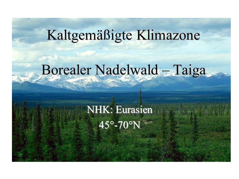 Kaltgemäßigte Klimazone Borealer Nadelwald – Taiga