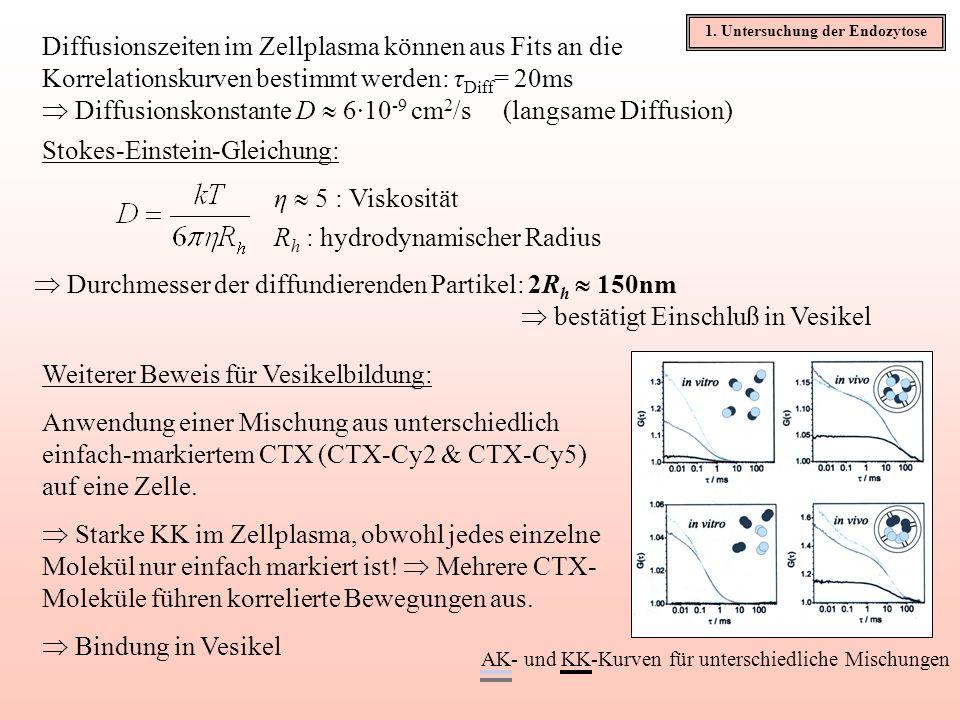 1. Untersuchung der Endozytose