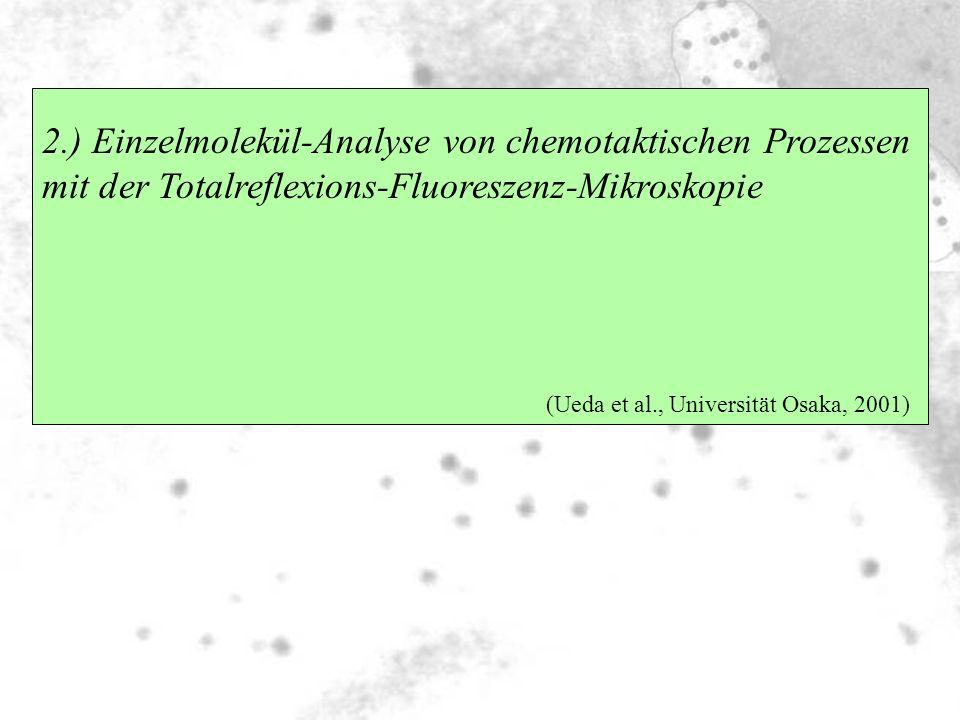 2.) Einzelmolekül-Analyse von chemotaktischen Prozessen mit der Totalreflexions-Fluoreszenz-Mikroskopie