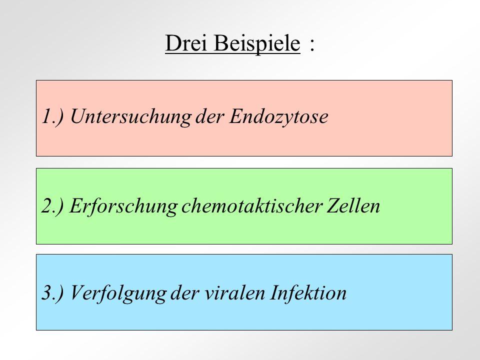Drei Beispiele : 1.) Untersuchung der Endozytose
