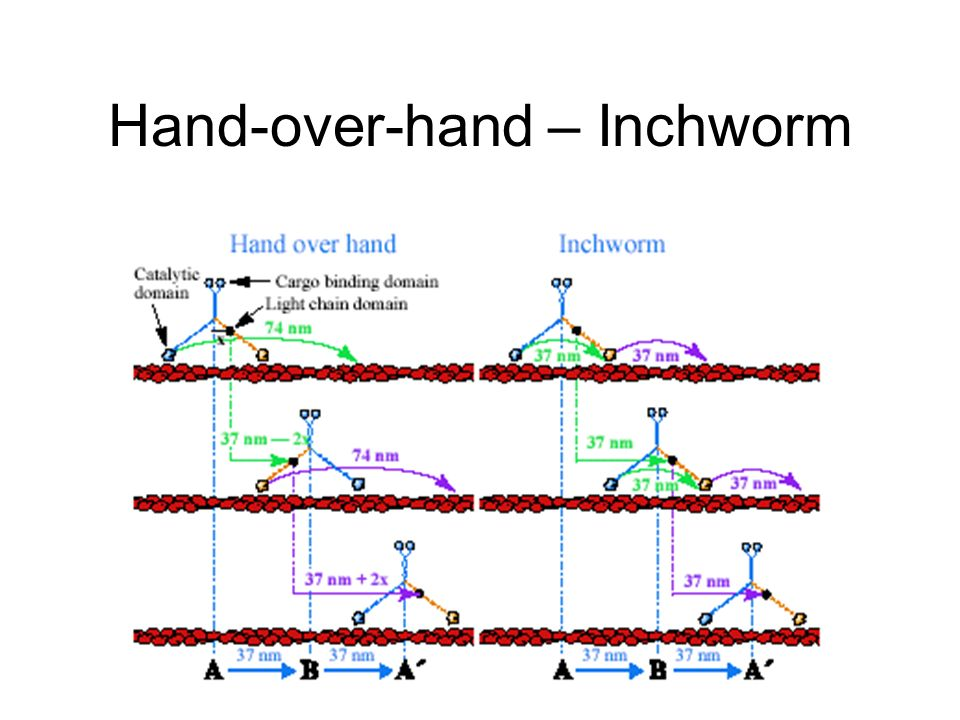 Hand-over-hand – Inchworm