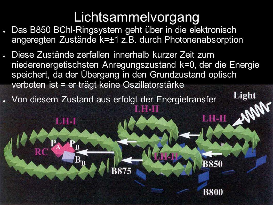 Lichtsammelvorgang Das B850 BChl-Ringsystem geht über in die elektronisch angeregten Zustände k=±1 z.B. durch Photonenabsorption.