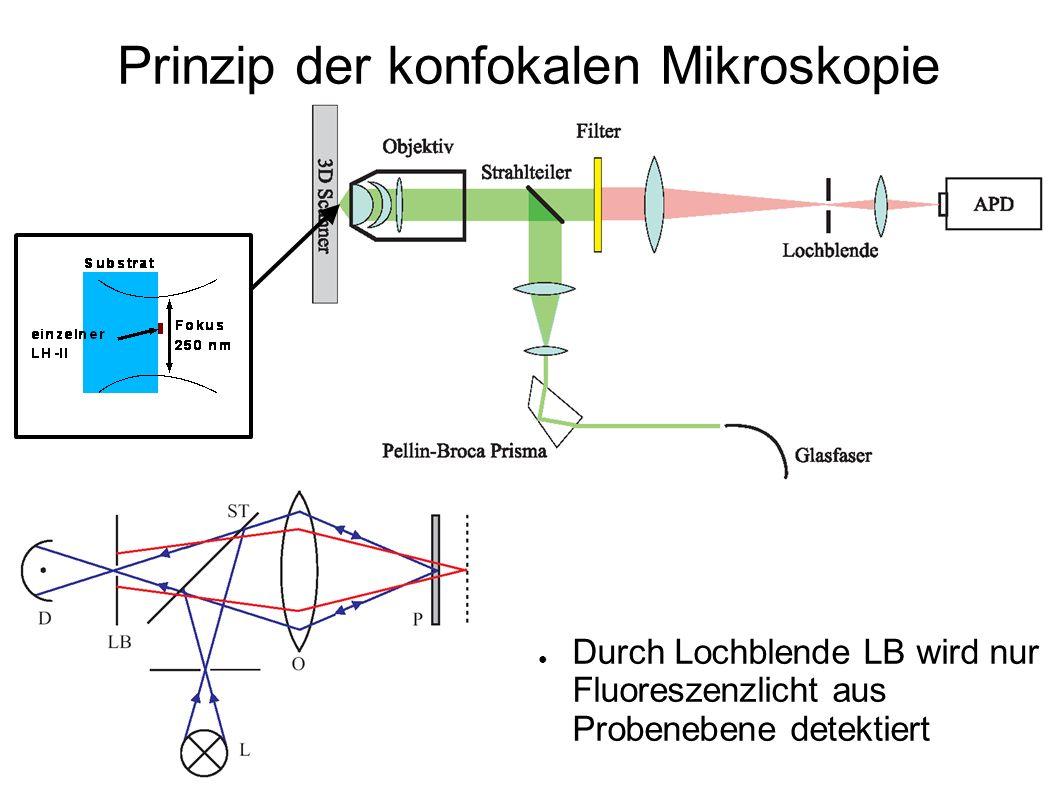 Prinzip der konfokalen Mikroskopie