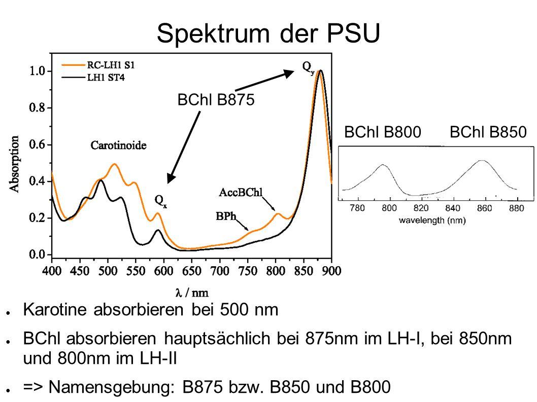 Spektrum der PSU Karotine absorbieren bei 500 nm