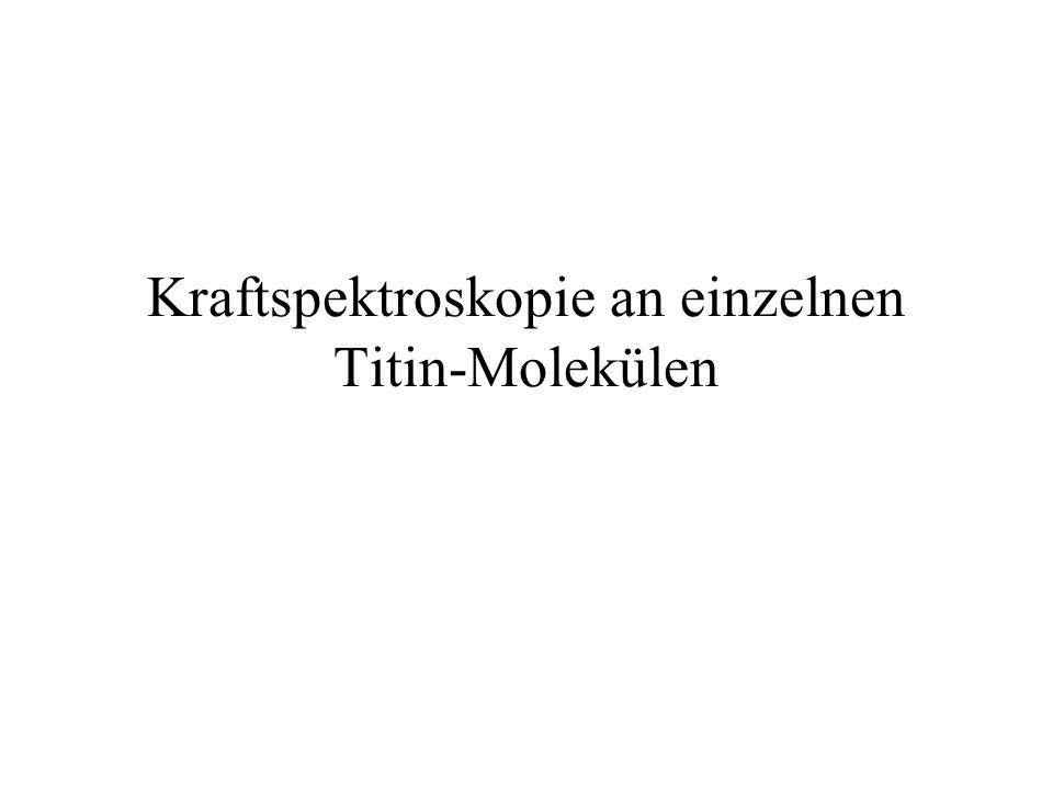 Kraftspektroskopie an einzelnen Titin-Molekülen