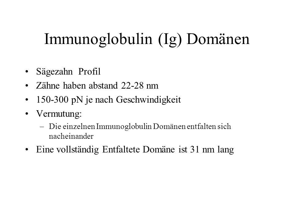 Immunoglobulin (Ig) Domänen