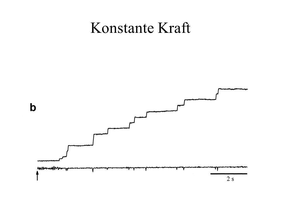 Konstante Kraft