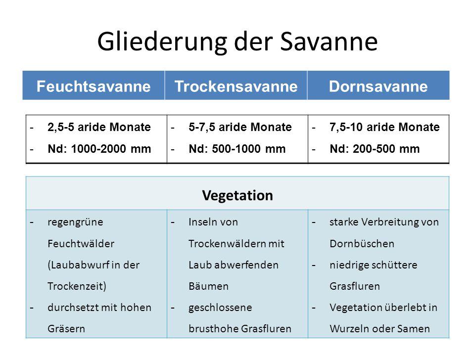 Gliederung der Savanne