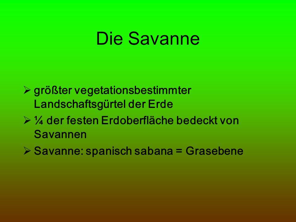 Die Savanne größter vegetationsbestimmter Landschaftsgürtel der Erde