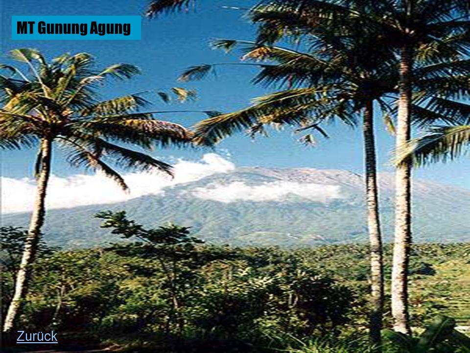 MT Gunung Agung Zurück