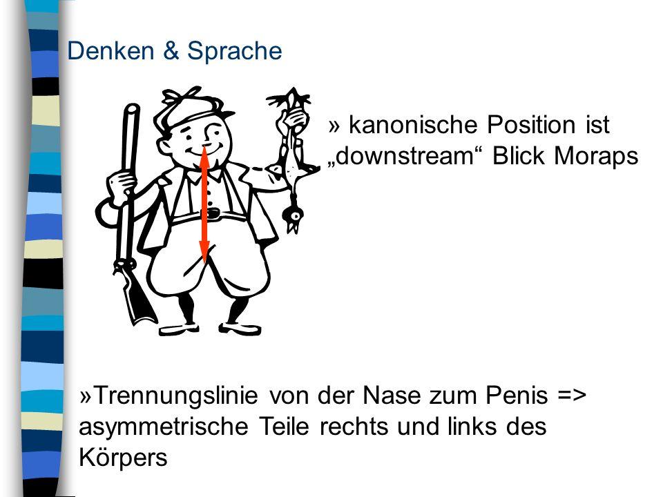 """Denken & Sprache kanonische Position ist """"downstream Blick Moraps"""
