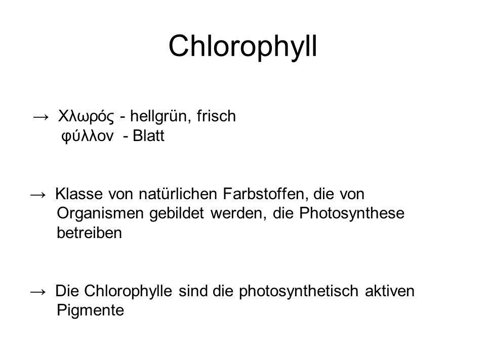 Chlorophyll φύλλον - Blatt