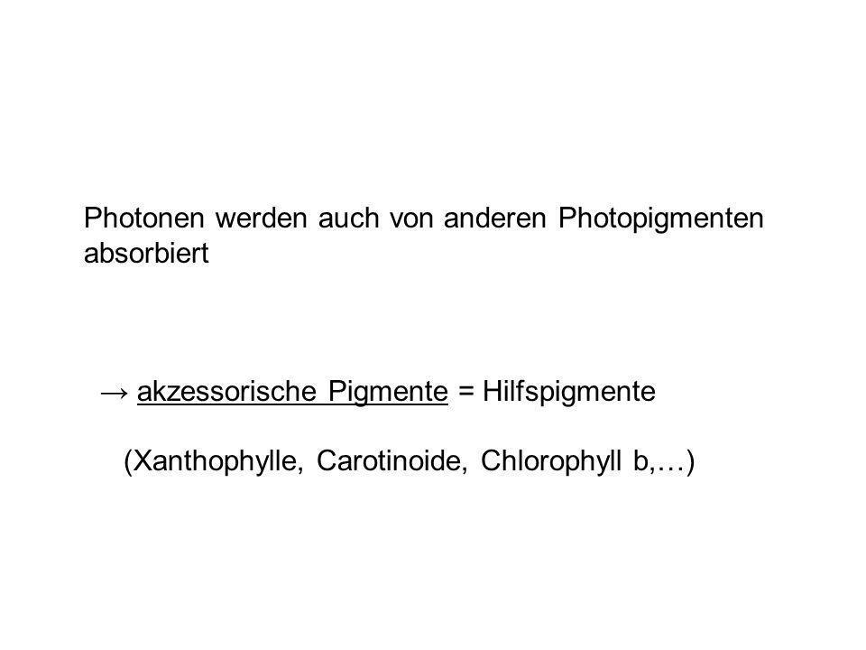 Photonen werden auch von anderen Photopigmenten