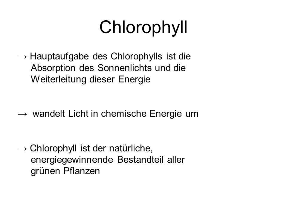 Chlorophyll → Hauptaufgabe des Chlorophylls ist die