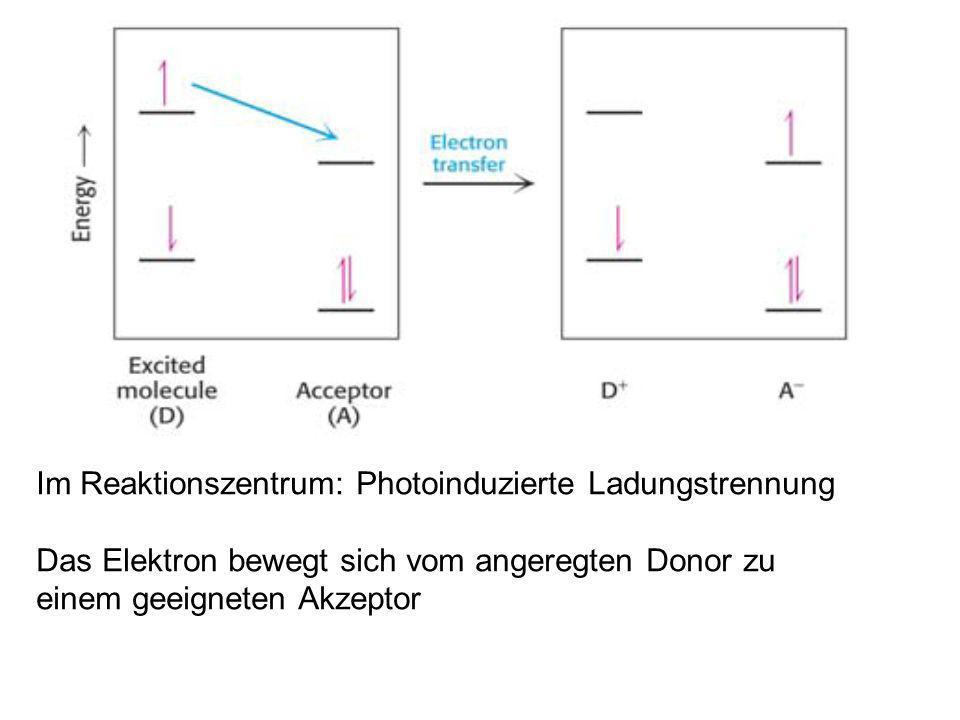 Im Reaktionszentrum: Photoinduzierte Ladungstrennung