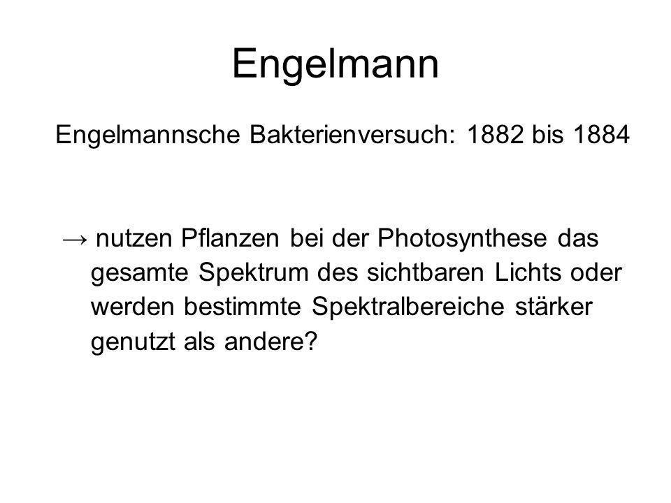 Engelmann Engelmannsche Bakterienversuch: 1882 bis 1884