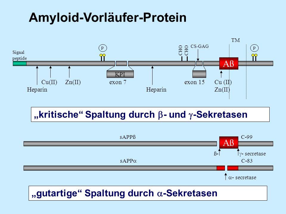 Amyloid-Vorläufer-Protein