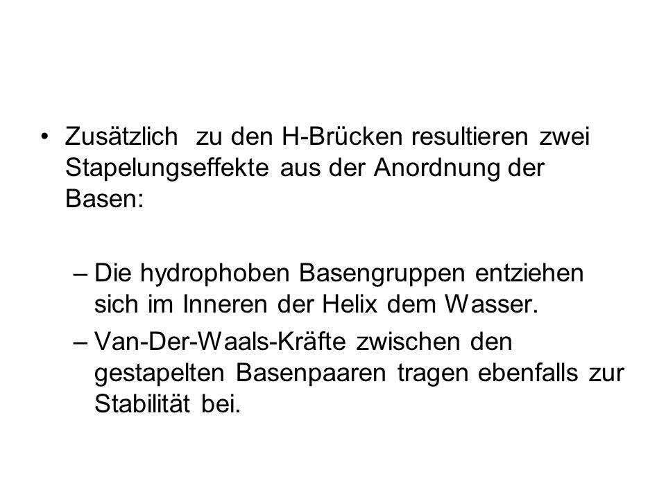 Zusätzlich zu den H-Brücken resultieren zwei Stapelungseffekte aus der Anordnung der Basen: