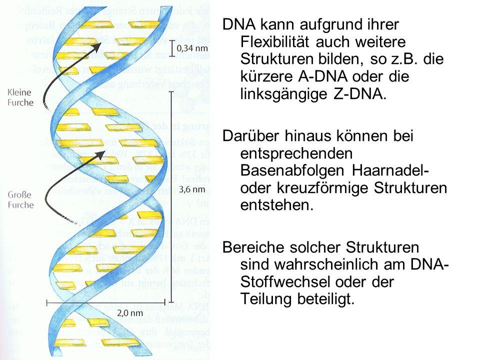 DNA kann aufgrund ihrer Flexibilität auch weitere Strukturen bilden, so z.B. die kürzere A-DNA oder die linksgängige Z-DNA.