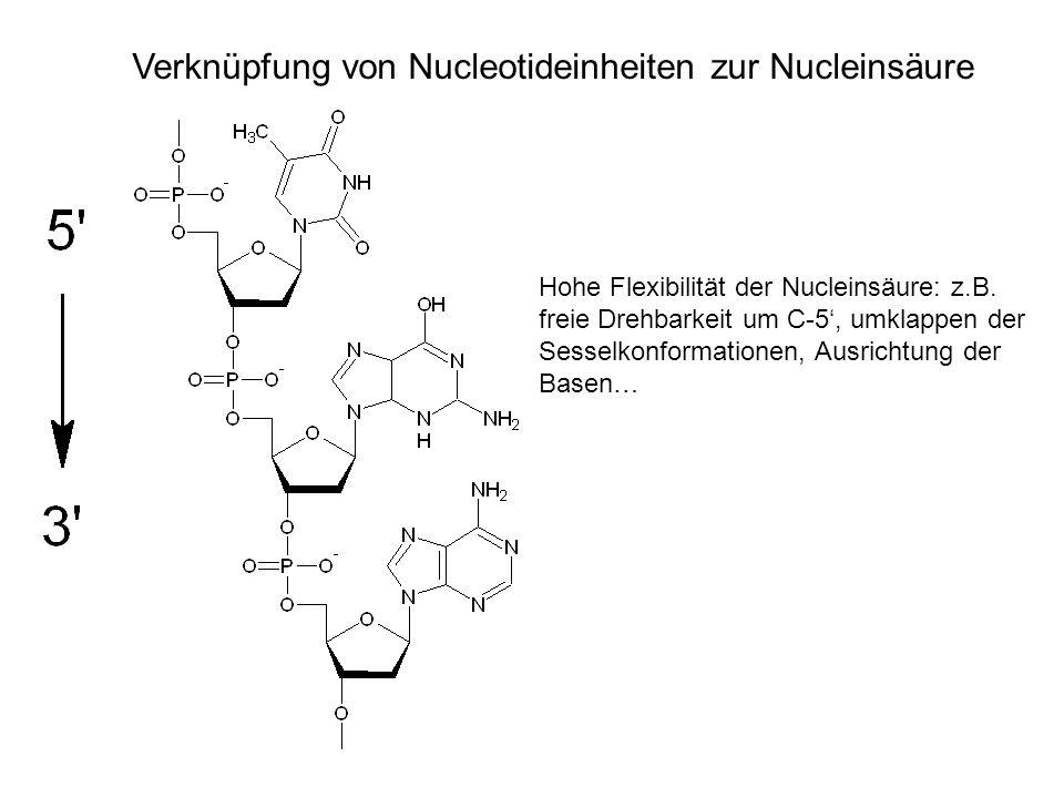 Verknüpfung von Nucleotideinheiten zur Nucleinsäure