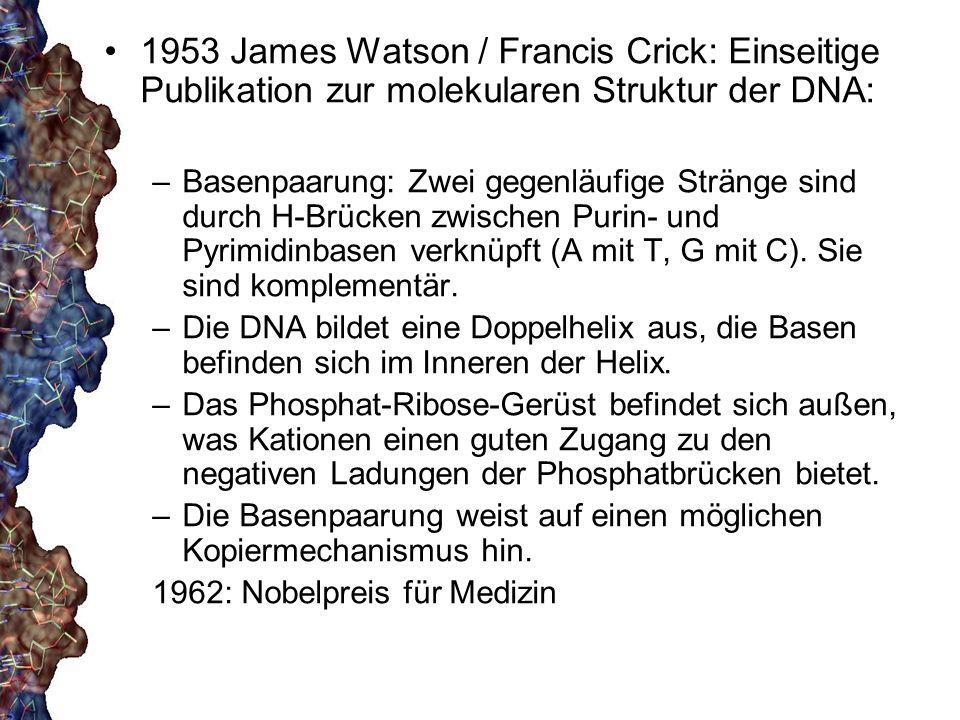 1953 James Watson / Francis Crick: Einseitige Publikation zur molekularen Struktur der DNA:
