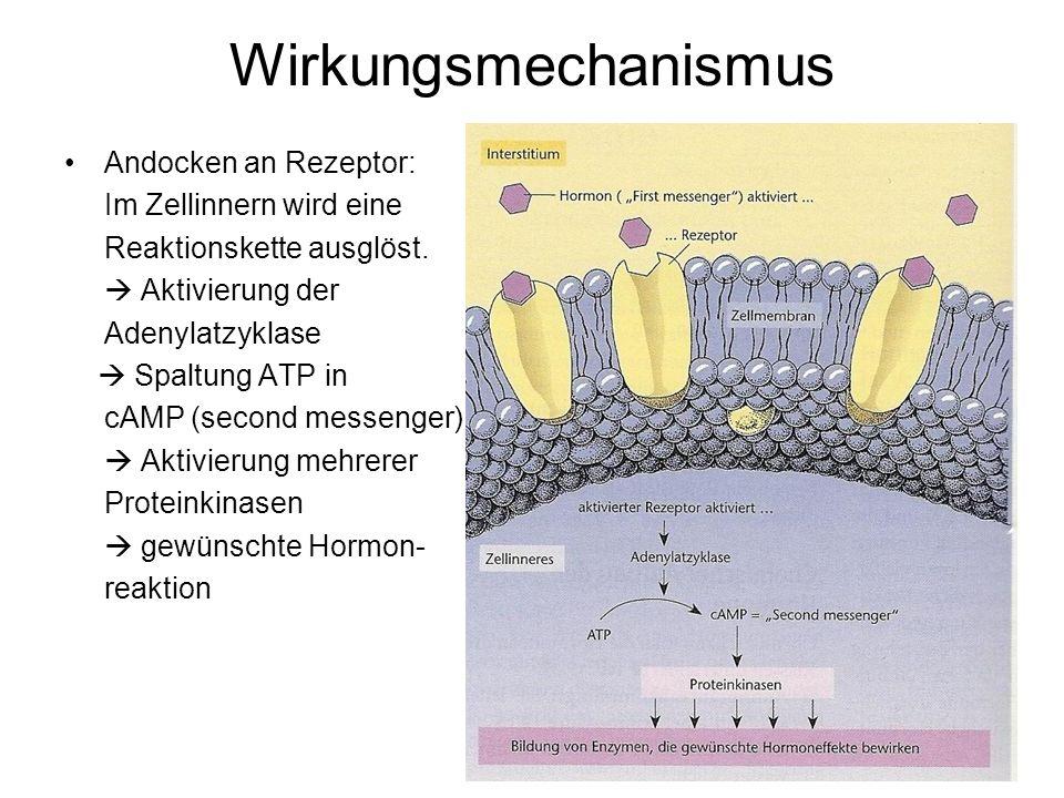 Wirkungsmechanismus Andocken an Rezeptor: Im Zellinnern wird eine