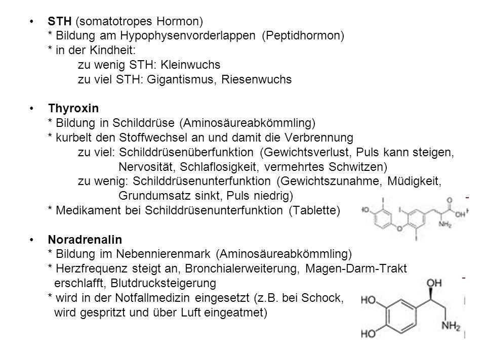 STH (somatotropes Hormon)