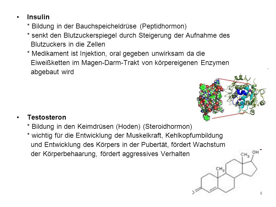 Insulin * Bildung in der Bauchspeicheldrüse (Peptidhormon) * senkt den Blutzuckerspiegel durch Steigerung der Aufnahme des.