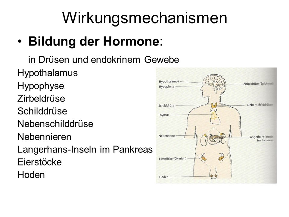 Wirkungsmechanismen Bildung der Hormone: