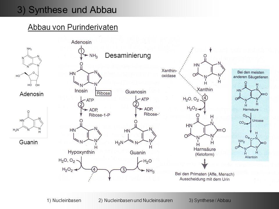 1) Nucleinbasen 2) Nucleinbasen und Nucleinsäuren 3) Synthese / Abbau