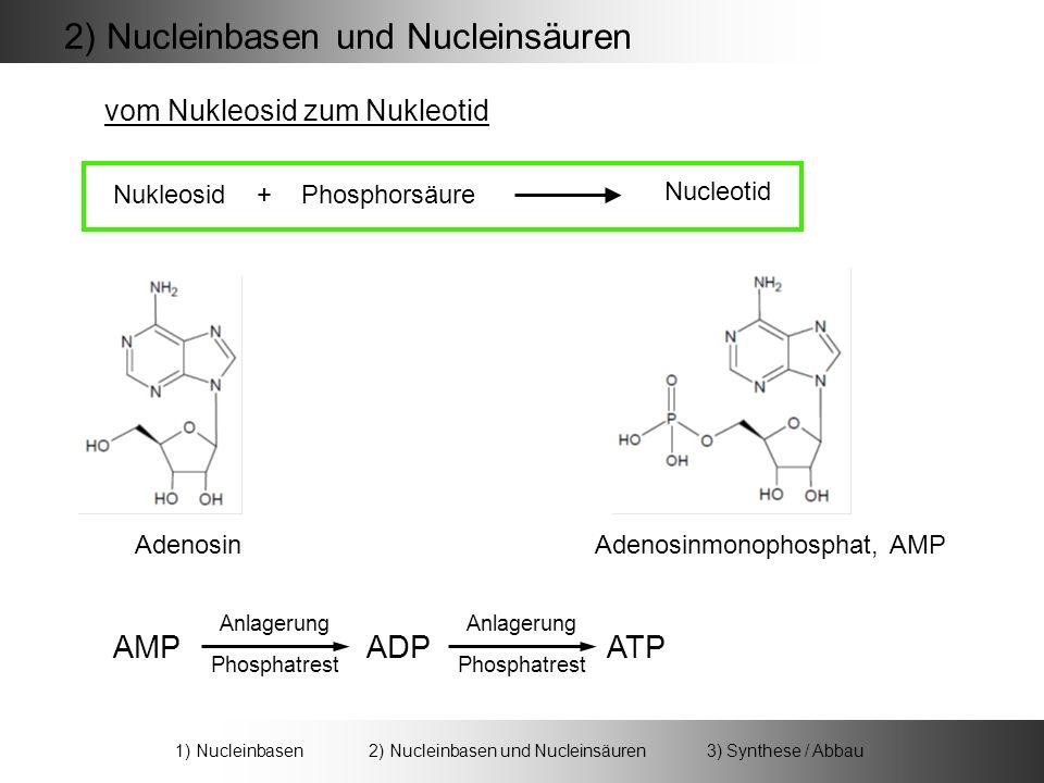 2) Nucleinbasen und Nucleinsäuren