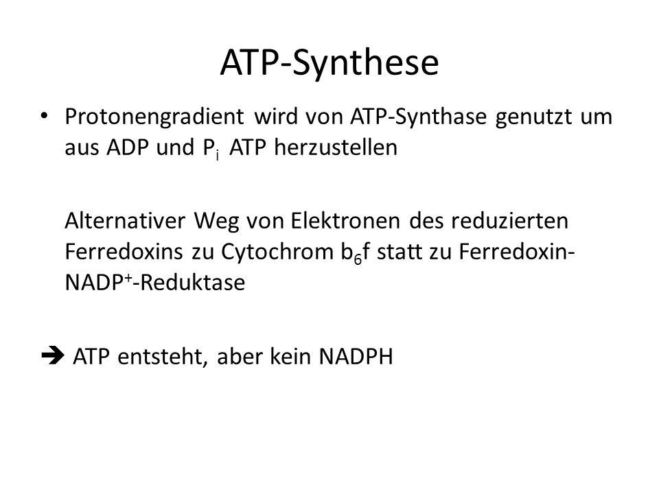 ATP-Synthese Protonengradient wird von ATP-Synthase genutzt um aus ADP und Pi ATP herzustellen.
