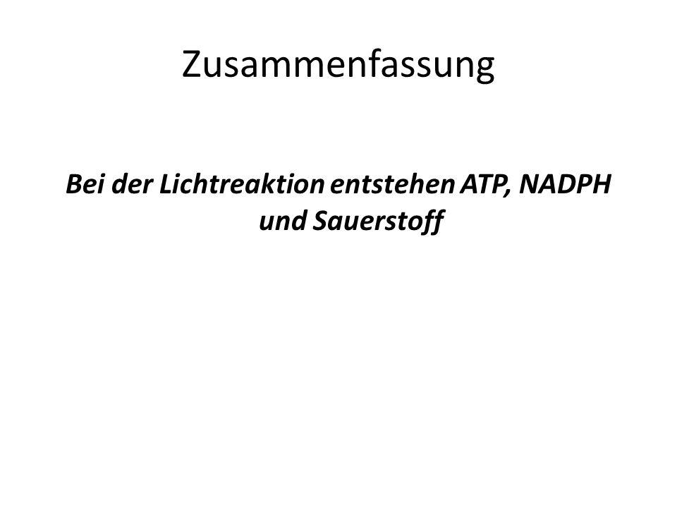 Bei der Lichtreaktion entstehen ATP, NADPH und Sauerstoff