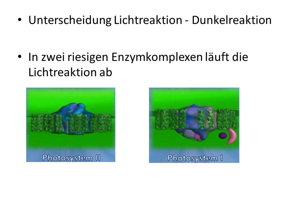 Unterscheidung Lichtreaktion - Dunkelreaktion