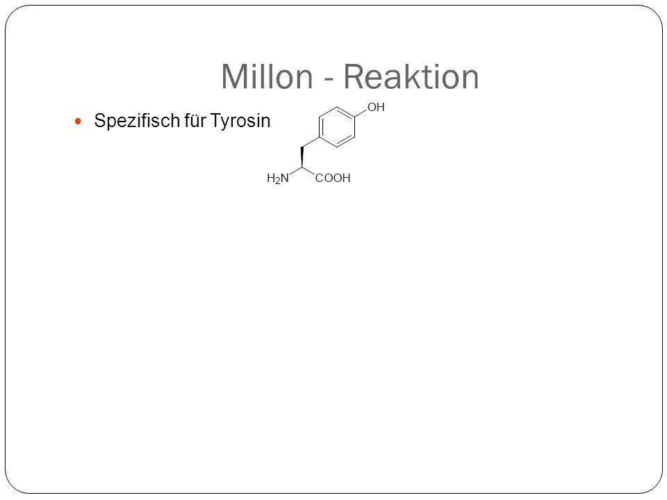 Millon - Reaktion Spezifisch für Tyrosin