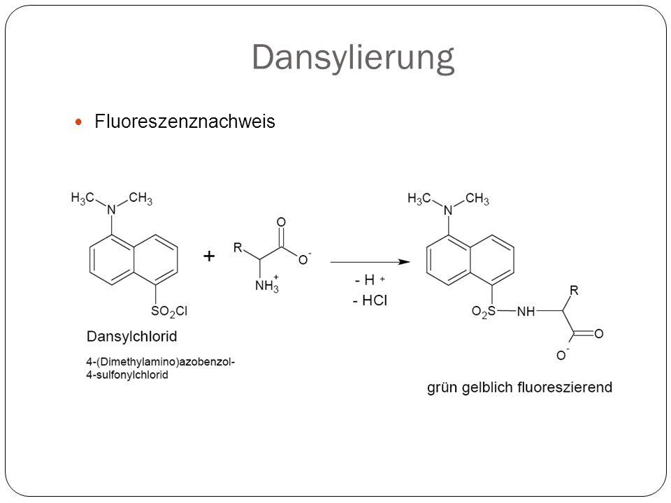 Dansylierung Fluoreszenznachweis