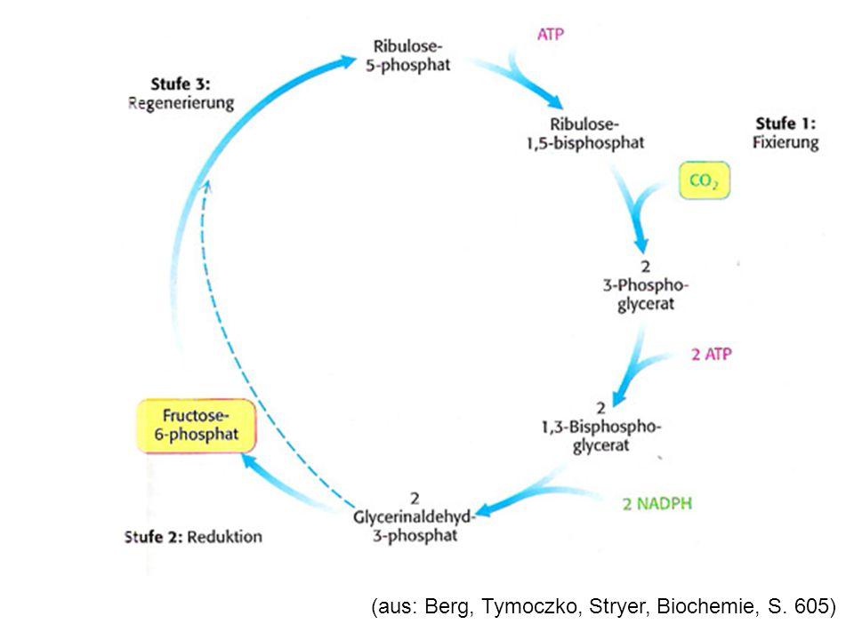 (aus: Berg, Tymoczko, Stryer, Biochemie, S. 605)