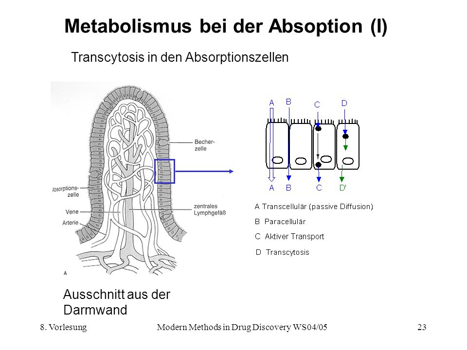 Metabolismus bei der Absoption (I)
