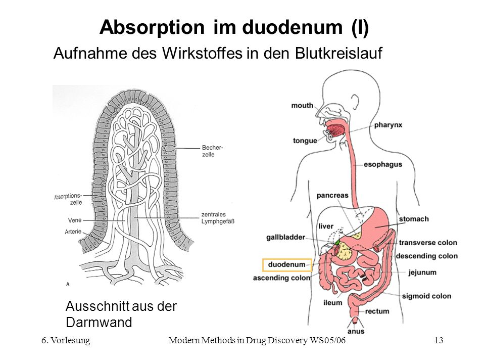 Absorption im duodenum (I)