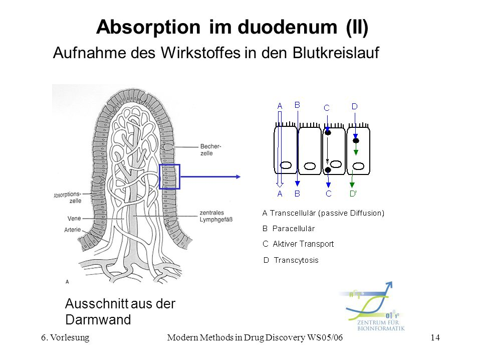 Absorption im duodenum (II)
